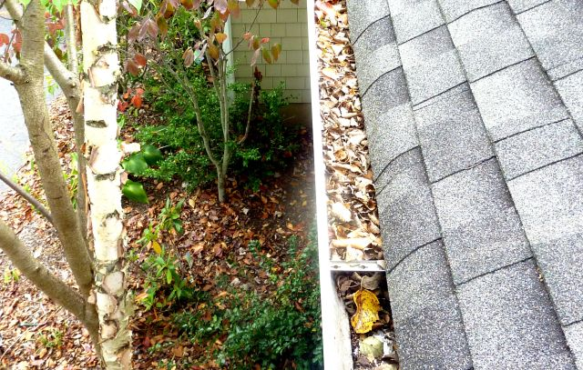 Gutter Filled with Fresh Leaves